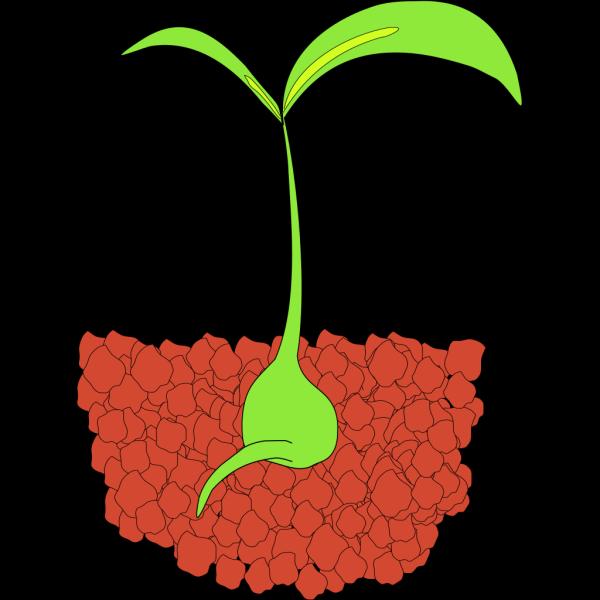 Flower Plant PNG Clip art