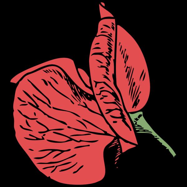 Sweet Pea PNG Clip art