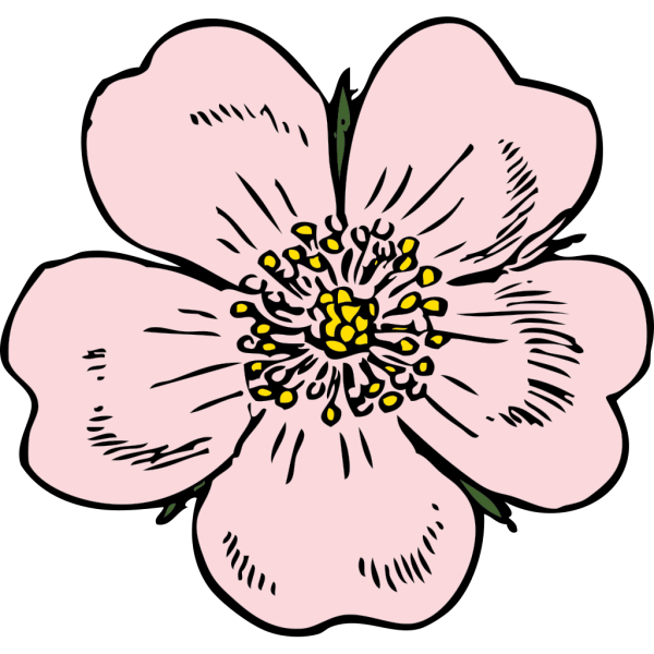 Wild Rose PNG Clip art