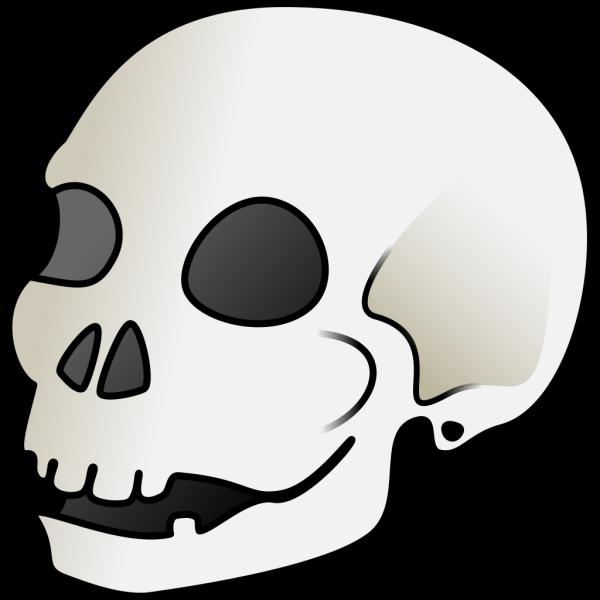Human Skull PNG Clip art