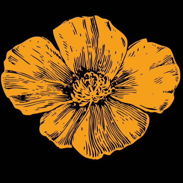 California Poppy PNG Clip art