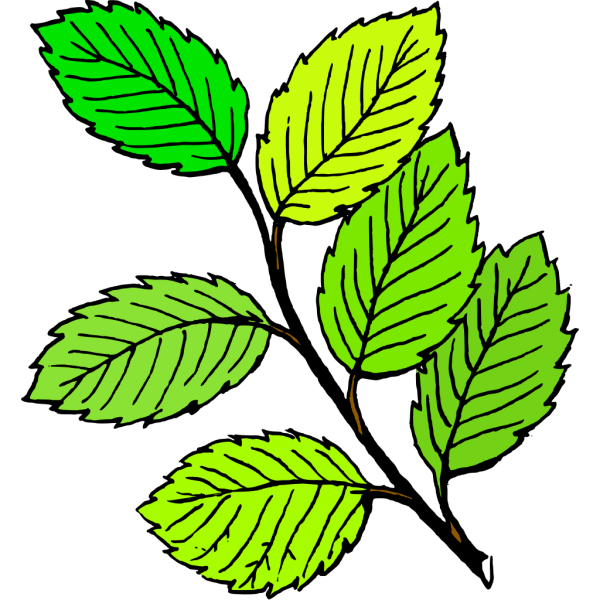 Summer Leaves PNG images