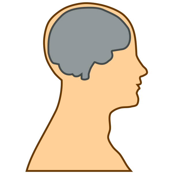 Medical Diagram Of Brain PNG Clip art