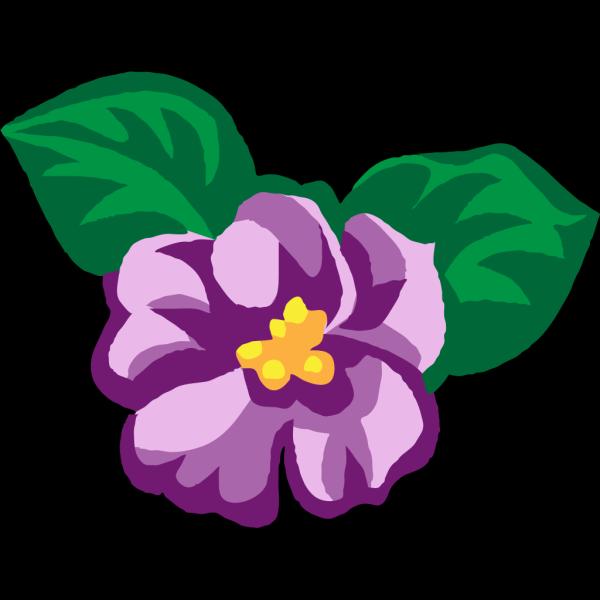 African Violets PNG Clip art