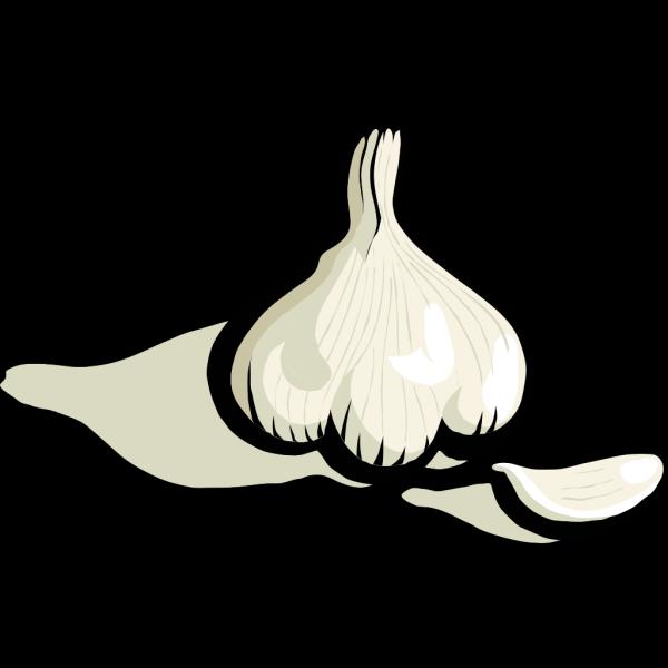 Garlic PNG Clip art