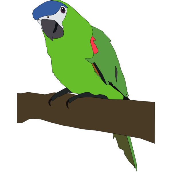 Parrot Illustration PNG images