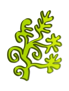 Water Plant PNG Clip art