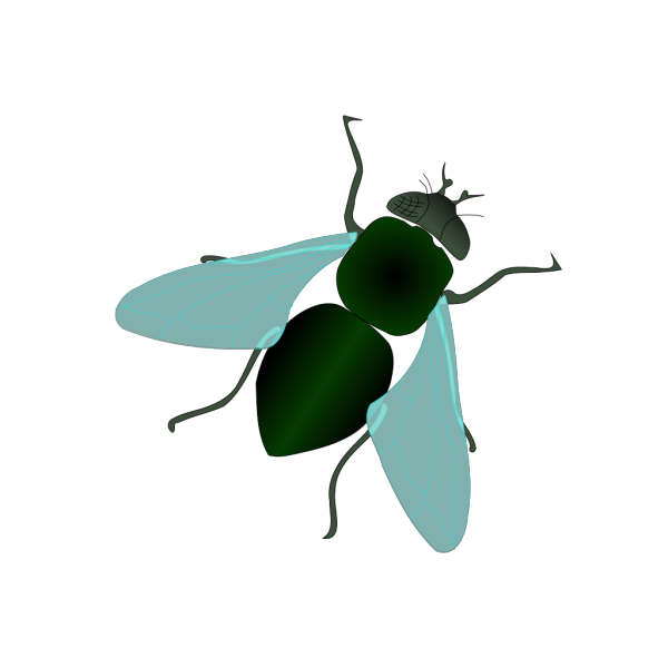 Green House Fly PNG Clip art