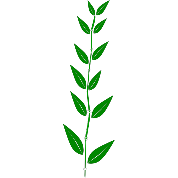 Bamboo Leaf PNG Clip art