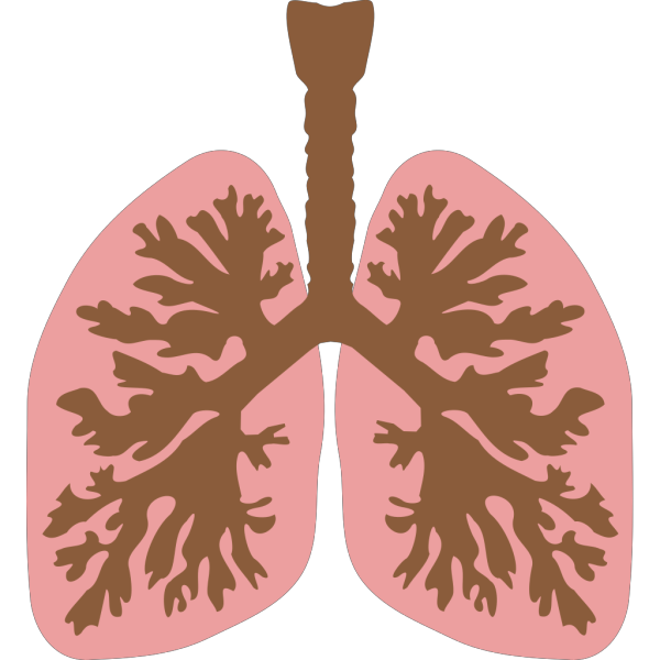Lungs And Bronchus PNG images