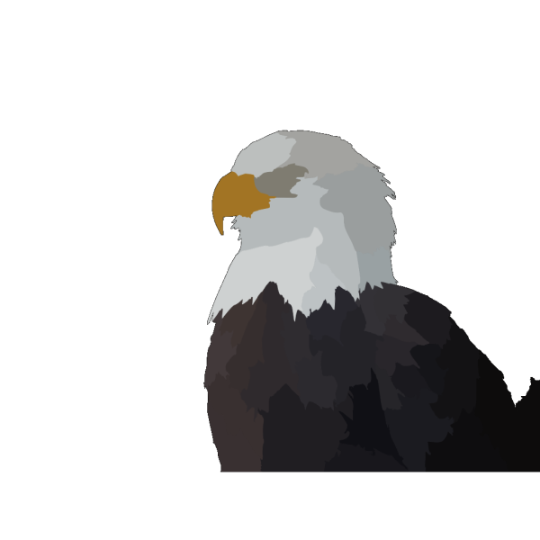 Eagle Head In Color PNG Clip art