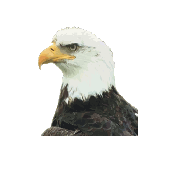 Turned Eagle PNG Clip art