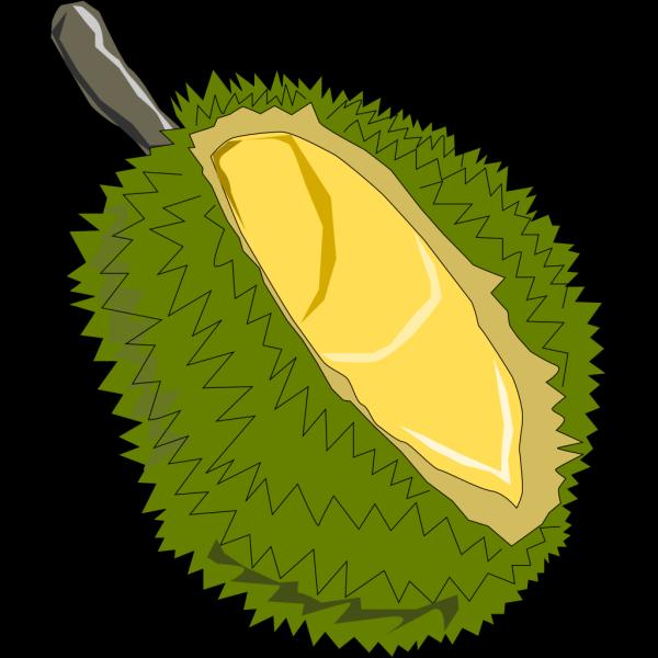 Durian Fruit PNG Clip art