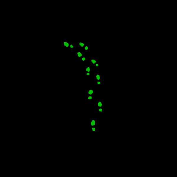 Greenshoes PNG Clip art