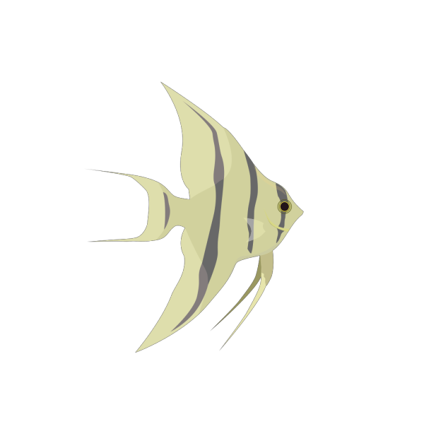 Hzo Angel Fish PNG Clip art