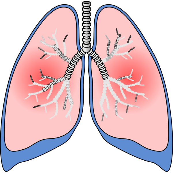 Lungs PNG images