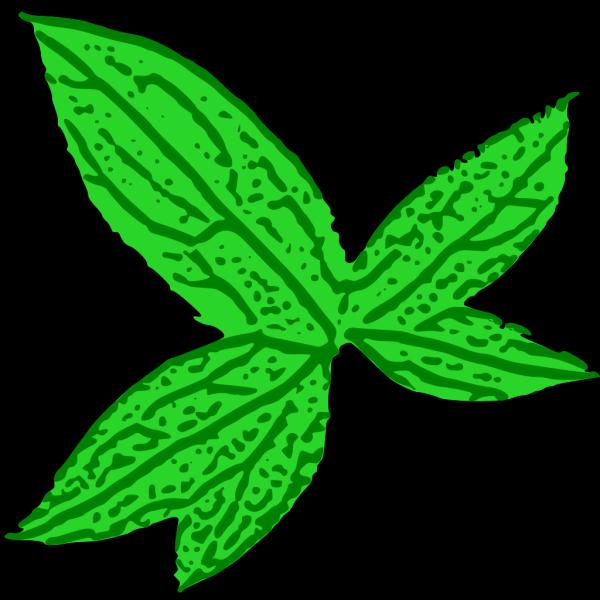 Green Leaf PNG Clip art