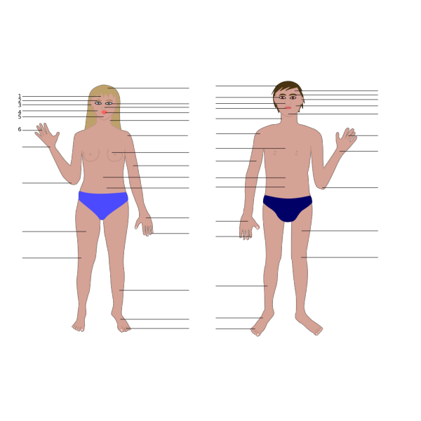 Cartoon Human Body Parts PNG Clip art