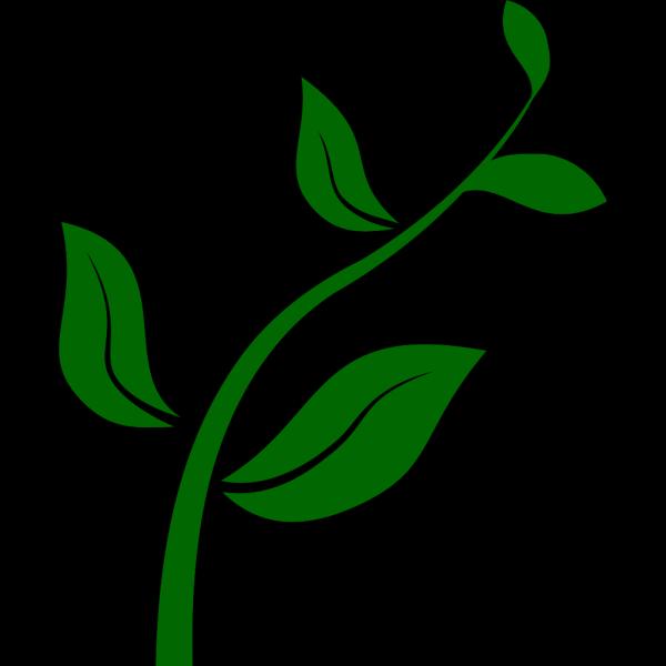 Growing Plant PNG Clip art