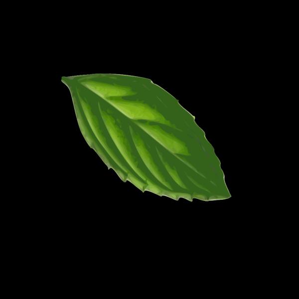 Mint Leaf PNG Clip art