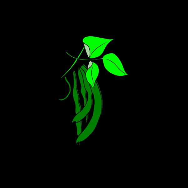 Runner Bean PNG Clip art