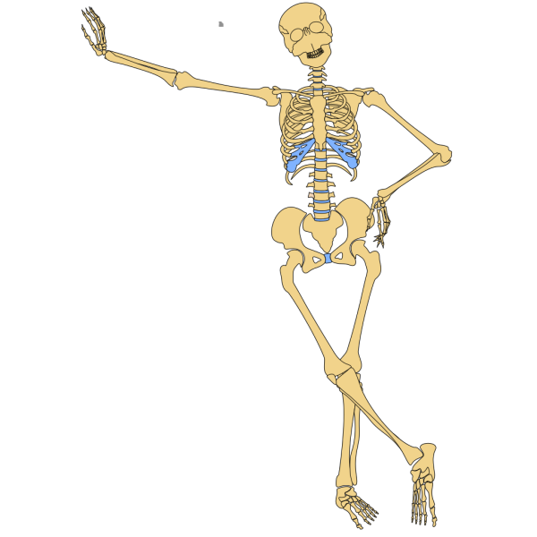 Human Skeleton Outline PNG image