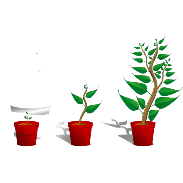 Plant Growth PNG clipart