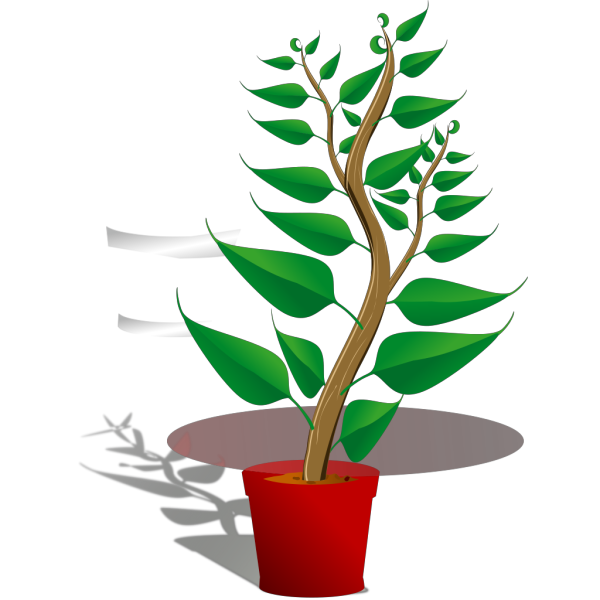 Tall Plant In Pot PNG Clip art