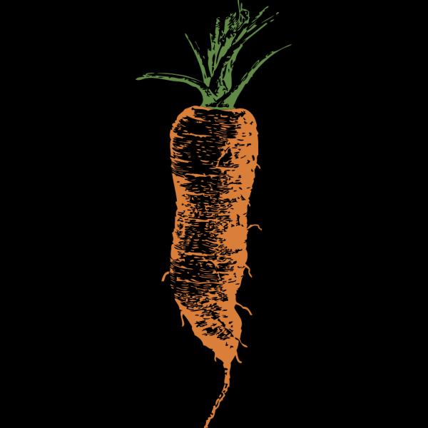 Carrot PNG Clip art