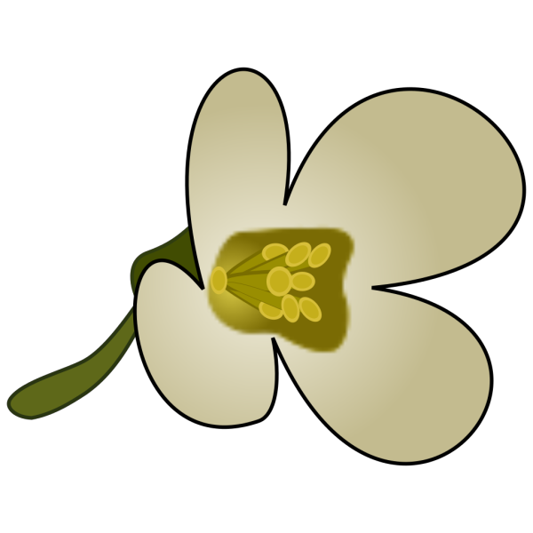 Thaliana Flower PNG icons