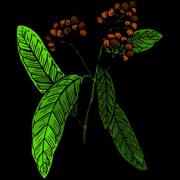 Planter Box Art PNG Clip art