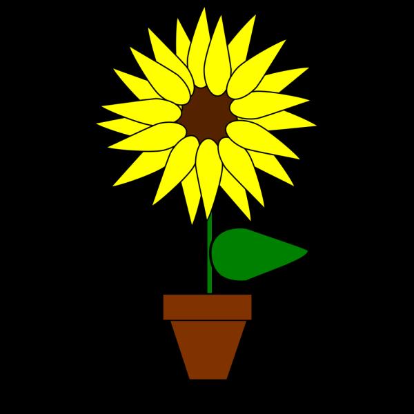 Sunflower In A Pot PNG Clip art