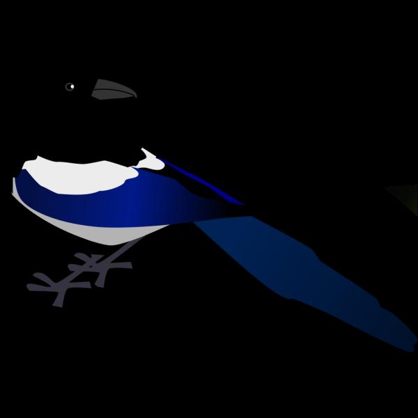 Magpie Bird PNG Clip art