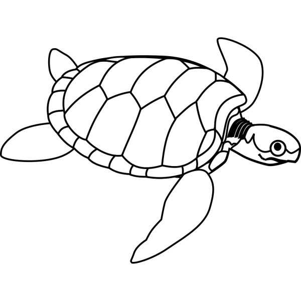 Turtle With Big Eye PNG Clip art