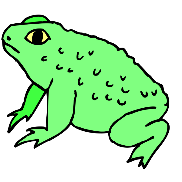 Warty Frog PNG image