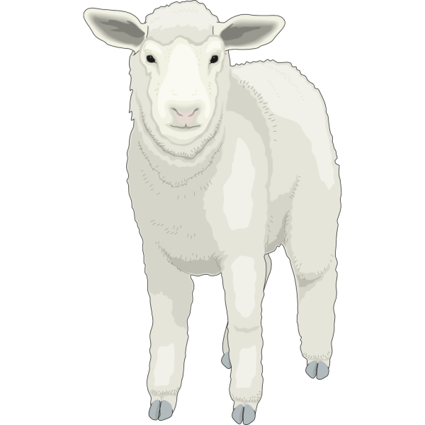 Sheep Front View PNG Clip art