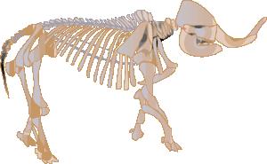Mastodon Fossil PNG Clip art