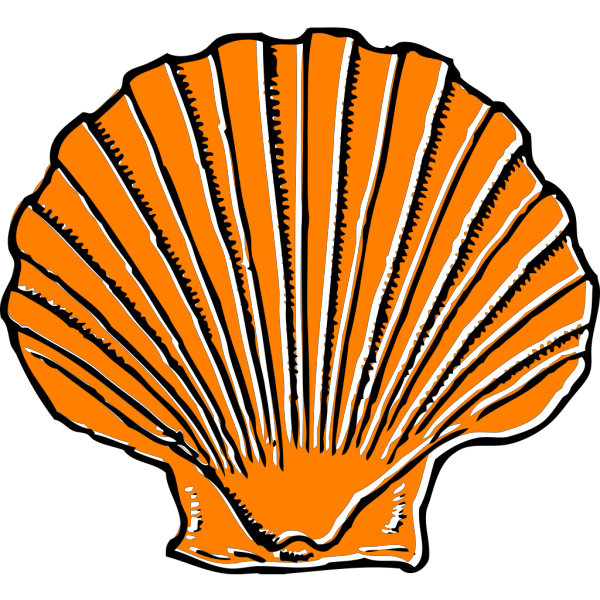 Orange Seashell PNG Clip art