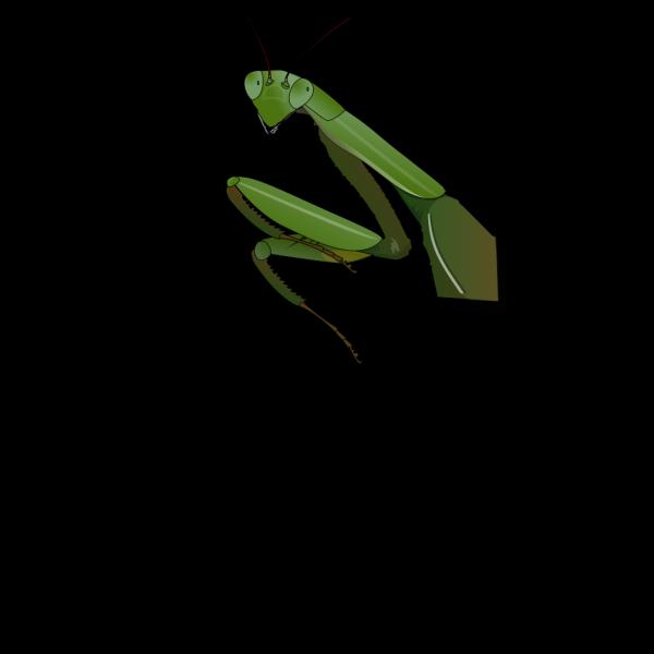 Cartoon Praying Mantis PNG Clip art