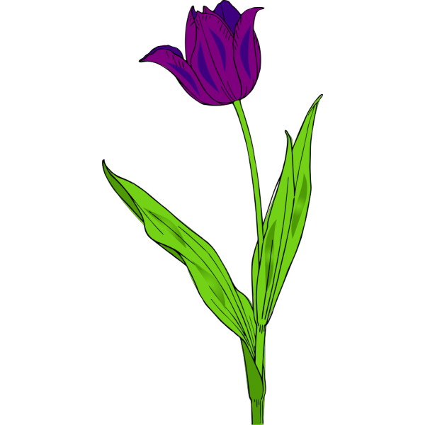 Purple Tulip PNG clipart
