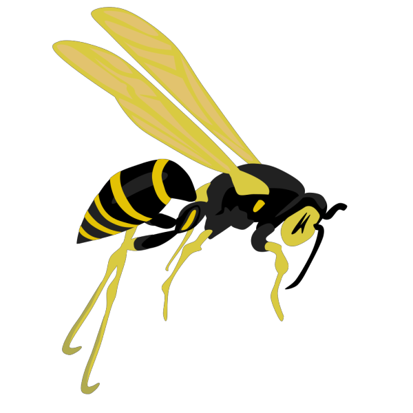 Flying Wasp 2 PNG Clip art