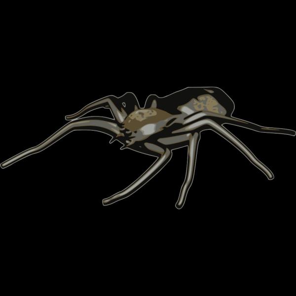 Spider Art PNG Clip art