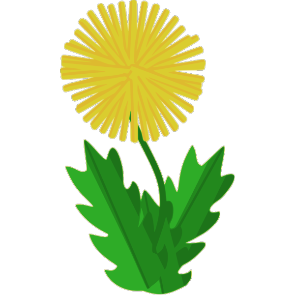 Cartoon Dandelion PNG images
