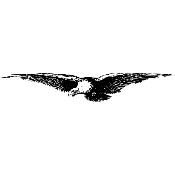 Flying Eagle PNG Clip art