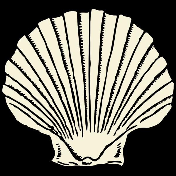 Scallop Shell PNG Clip art