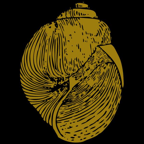 Snail Shell PNG Clip art
