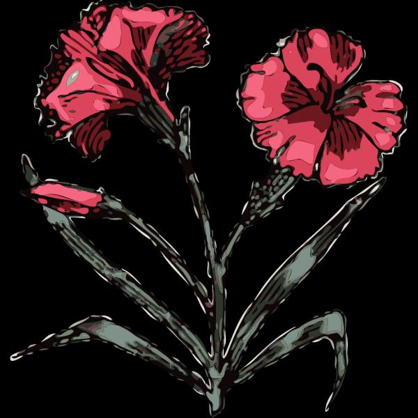Carnation Flower 3 PNG Clip art