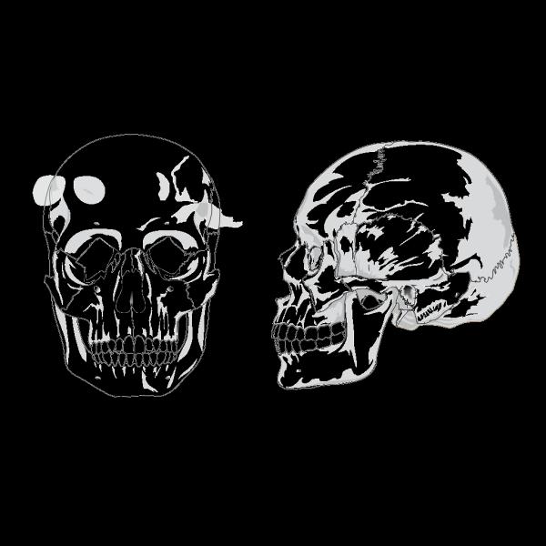 Human Skull No Text No Color PNG Clip art