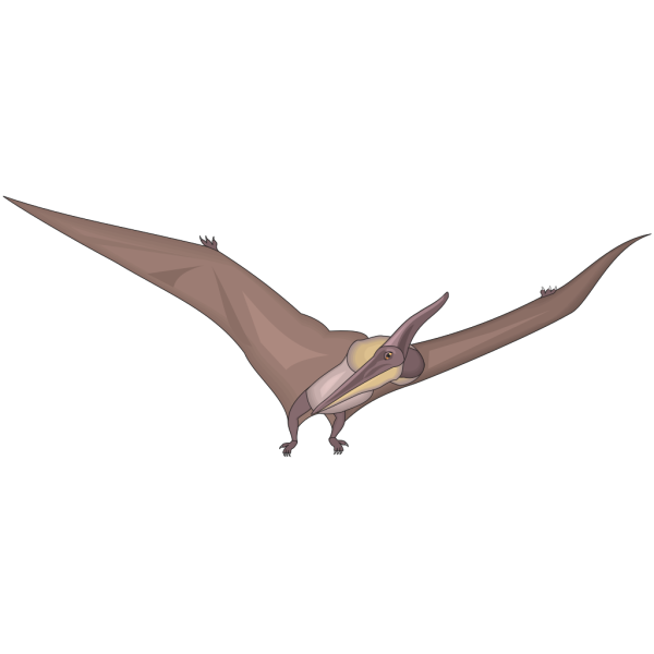 Pteranodon Looking PNG images