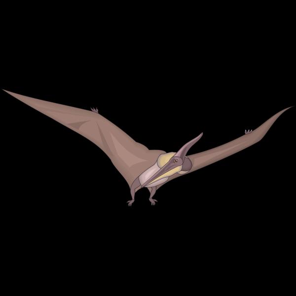 Pteranodon Looking PNG Clip art